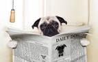 Multas y sanciones por los excrementos de tu mascota