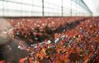 Florette aumentará la sostenibilidad en su producción
