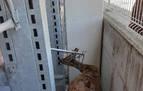 Rescatan a un corzo del interior de una tienda de Berriozar