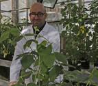 Navarra, en un estudio internacional sobre cultivos y cambio climático