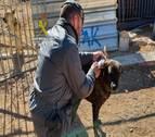 Detenida la dueña de un protectora por matar a unos 500 animales