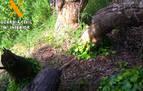 Localizado un cepo de caza ilegal en Murillo el Cuende