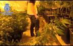 Golpe al mayor entramado de heroína y marihuana en Madrid, con 46 arrestos