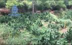 Intervenidas cinco toneladas y media de marihuana a una organización albanesa