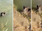 El ataque de un jabalí a dos pescadores en Falces