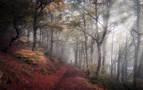 'Ibilaldia' gana la edición 2020 del Concurso fotográfico Conocer Navarra