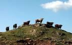 """La Meca selecciona toros para Sanfermines en un escenario """"incierto"""""""