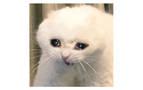 Día del Gato: Los memes de gatos más graciosos de internet