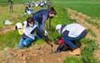 Un centenar de empleados de Siemens Gamesa plantan 1.000 árboles en Mendaza