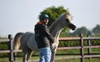 Un pamplonés, criador de caballos en una granja de Chimay (Bélgica)