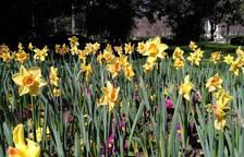 Fotos de la primavera de los lectores 2017