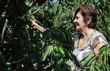Las cerezas, en el valle de Echauri y Milagro