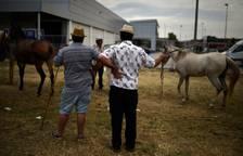 Feria de ganado equino de San Fermín,