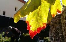 Fotos del otoño de los lectores 2017