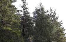 Los guardas forestales de Navarra y su hábitat