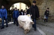 La cuta más grande parael bicentenario: Artajona celebró este domingo la 200 Rifa del Cuto en honor a San Antón con un animal de 270 kilos.