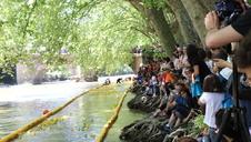 Una carrera de patitos de goma por el río Arga