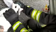 Reaniman a dos gatos intoxicados por un incendio en una vivienda en Turín