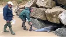 Hallan 17 delfines varados en Cantabria, 14 de ellos muertos