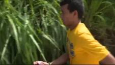 Peligrosa atracción turística con cocodrilos en Costa Rica