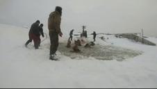 Imágenes de un rescate de caballos en Rusia