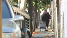 Vídeo | Sevilla exprime sus naranjos