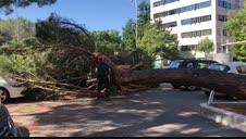 Trabajos tras la caída de un pino en el parque de Yamaguchi