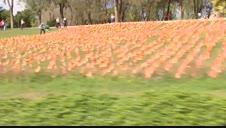 Colocan 53.000 banderas de España en un parque de Madrid por las víctimas del COVID-19