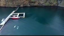 Vídeo: Primer baño en aguas abiertas de dos ballenas beluga en Islandia