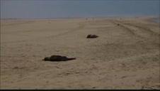 Hallan 7.000 focas muertas en las costas de Namibia