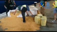 Intervenida más de una tonelada de cocaína oculta entre sacos de maíz en un barco proveniente de Brasil