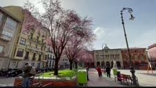 Vídeo de los árboles en flor en la plaza de San Francisco de Pamplona