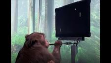 Pager, un mono de 9 años, juega a un videojuego