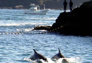 Pesca de delfines en la pasada campaña en Taiji, Wakayama (Japón)