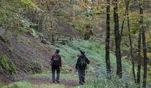 Imagen de los senderistas caminan por los verdes parajes de Quinto Real.