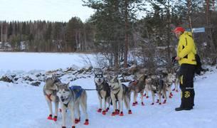 Baltasar Gallardo, con su tiro de 12 huskies, se encuentra estos días en Suecia entrenando para el Mundial.