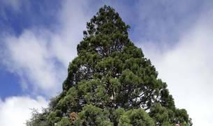 Los árboles más altos de Pamplona, pararrayos
