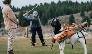 Un golfista golpea la bola ante la cabra que le lleva los palos