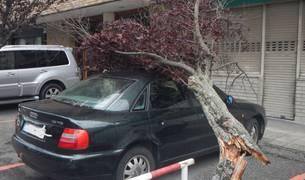 Las fuertes rachas de viento este miércoles por la tarde, que llegaron hasta los 70-80 kilómetros por hora, provocaron la caída de ocho árboles en distintas zonas de la ciudad, causando únicamente daños materiales en vehículos estacionados en la calle y en mobiliario urbano.