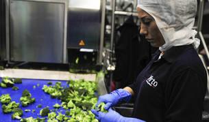 Una empleada de Virto trabaja con brócoli, producto en torno al cual girarán las jornadas.