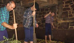 Los tres encargados de ayer de triturar la manzana esparcida en el lagar a base de golpe de mazas.