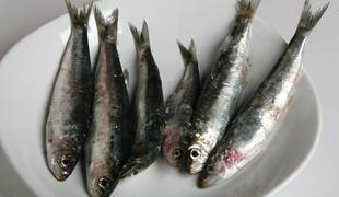 Las sardinas son una de las clases de peces más comercializadas y consumidas.