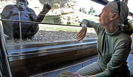 La científica Jane Goodall visita las instalaciones de Bioparc Valencia