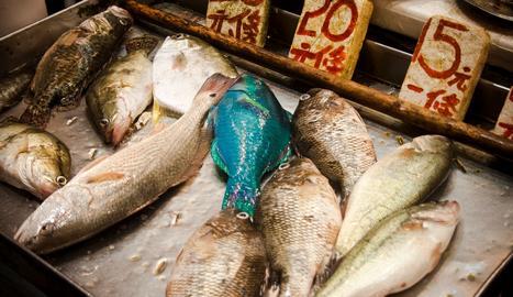 Entre los ejemplares con mayor nivel de material contaminante destaca una trucha de montaña con 11.400 becquereles de cesio por kilo, más de 100 veces el límite de 100 bequereles por kilo establecido en Japón