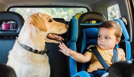 seguros coche mascota