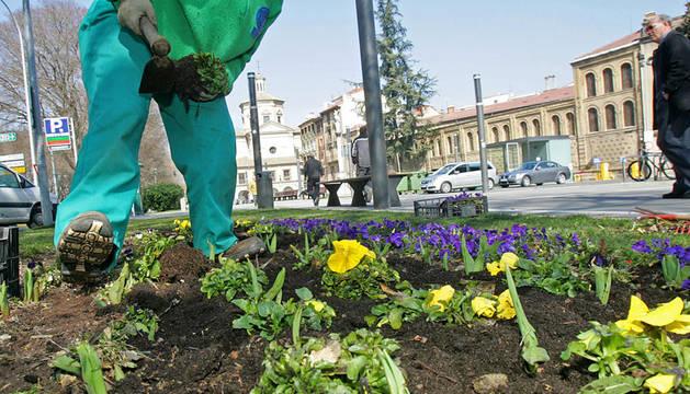 Trabajadores de Eulen trasplantando flores en las calles de Pamplona