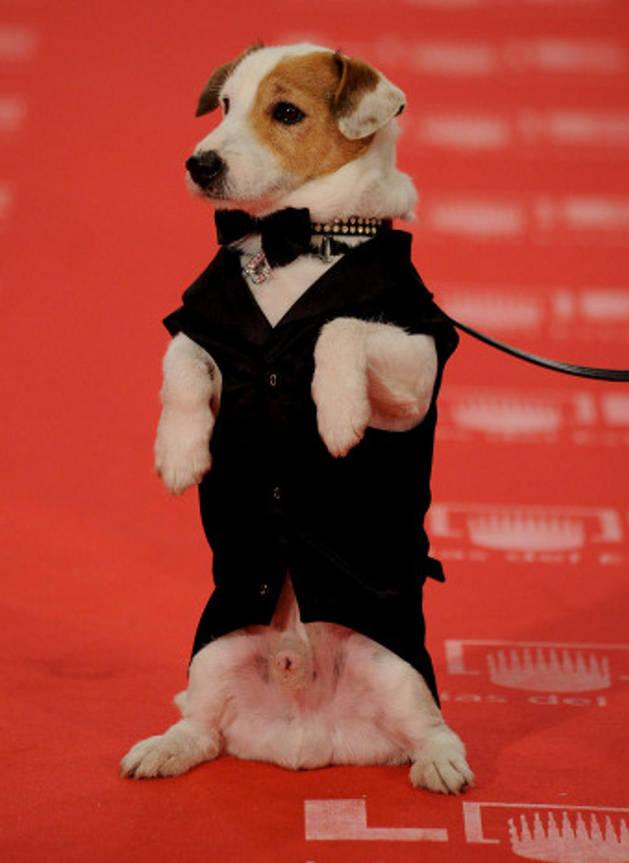 El perro Pancho