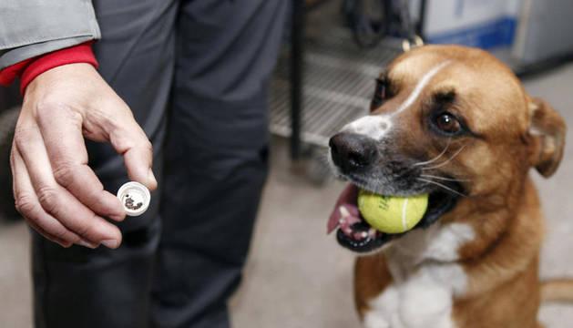 Charly, un perro detector de chinches
