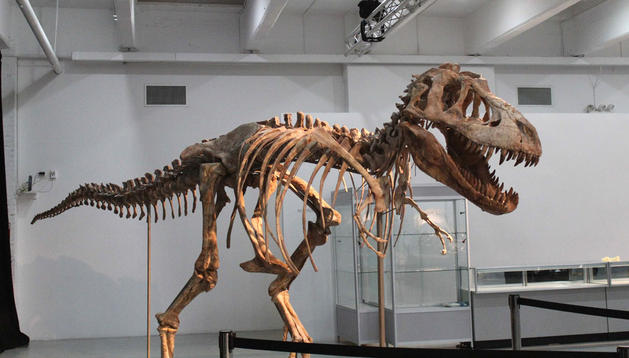 Esqueleto de un ejemplar de tiranosaurio