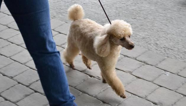 Este domingo se celebró en la terraza exterior del Centro Comercial Itaroa el I Concurso Canino de Navarra, con la participación de 29 perros de diferentes razas.